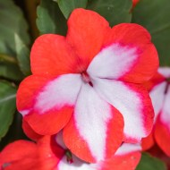 Flowers BackYard-43