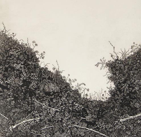 Stephanie-Jane-Rampton-spurlings-hedgerow