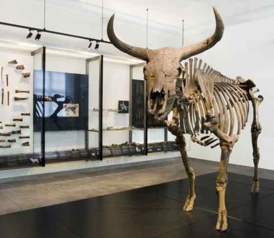 Il Ritorno dell'Uro: scheletro