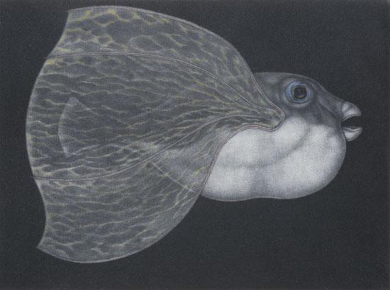 Graeme Peebles pufferfish 6