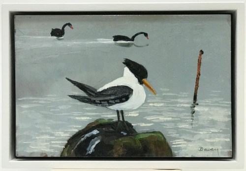 Philip Davey Hooded Tern & Swans