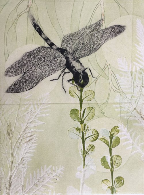 Trudy-Rice-Dragonfly-approaching