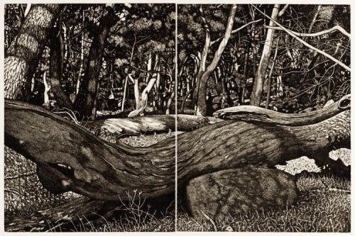 David Frazer, The Tangled Wood (Composition VII)