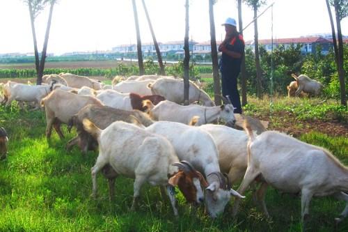 Haiyang Shandong Qingdao China 4