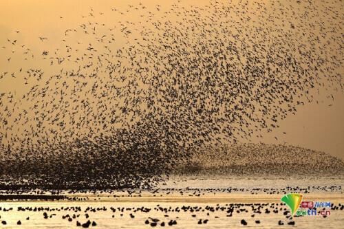 中国新型导弹接连列装,为何还要用老掉牙的火炮守岛?钱不是重点