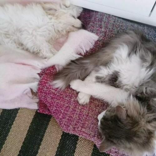 hund-og-kat