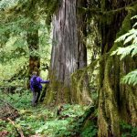 QDNR Departments | Quinault Forestry Department