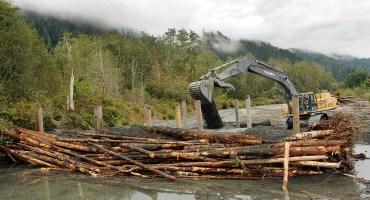 Quinault Habitat Management Program | Quinault Fisheries Department