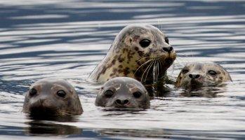 Quinault Marine Resources Program | Quinault Fisheries Department