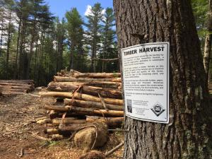 Quinault Timber Harvest and Trust Forestry Program