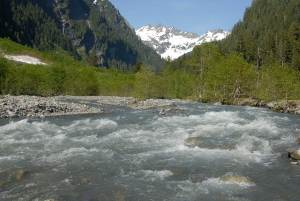 Healthy River Ecosystems | Quinault Division of Natural Resources