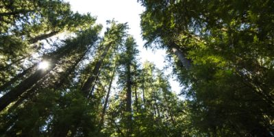 Forest Health | Quinault Division of Natural Resources