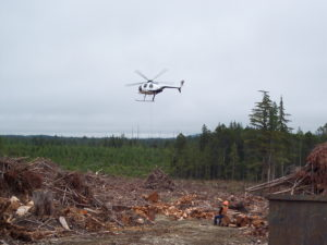 Quinault Salvage Management Program | Quinault Forestry Department