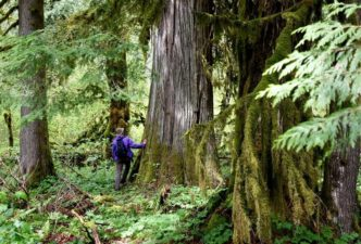 Quinault Timber Harvest Management Program | Quinault Forestry Department