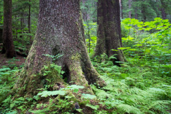 Quinault Inventory Management | Quinault Forestry Department