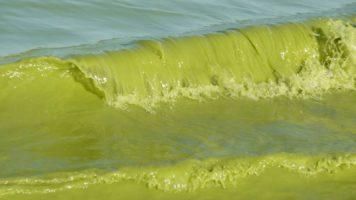 Quinault Algal Bloom Project