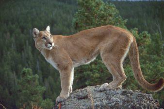 Quinault Wildlife Enforcement | Quinault Resource Enforcement Department