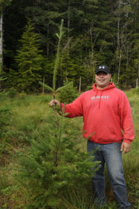 Quinault Regeneration Program | Quinault Forestry Department
