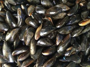 Quinault Shellfish Recovery Program | Quinault Division of Natural Resources