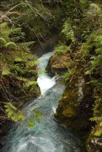 Quinault Water Quality | Quinault Division of Natural Resources