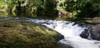 Quinault Opposes Chehalis Dam