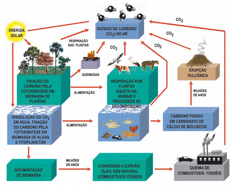 Figura 2: Ciclo global do carbono