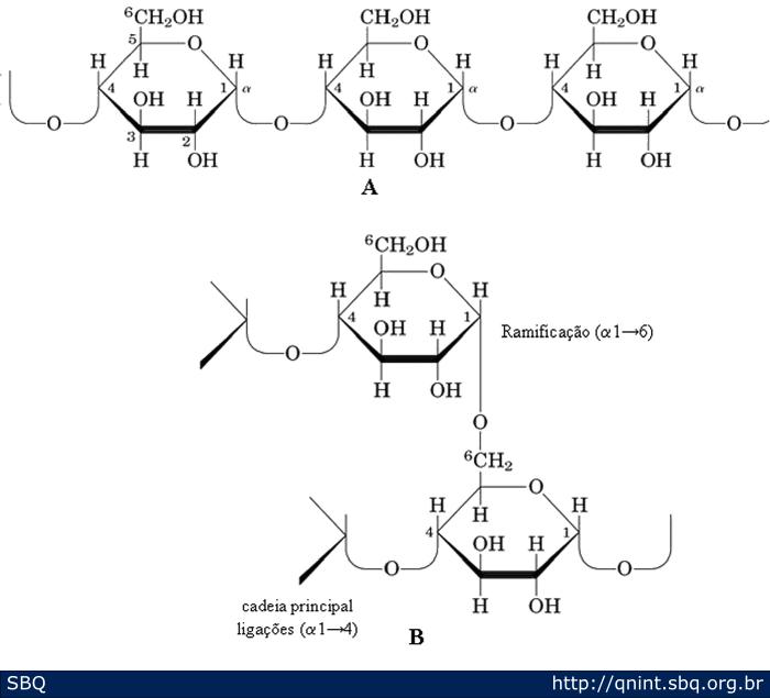 Figura 3: Representação da cadeia de amilose (A) e amilopectina (B).