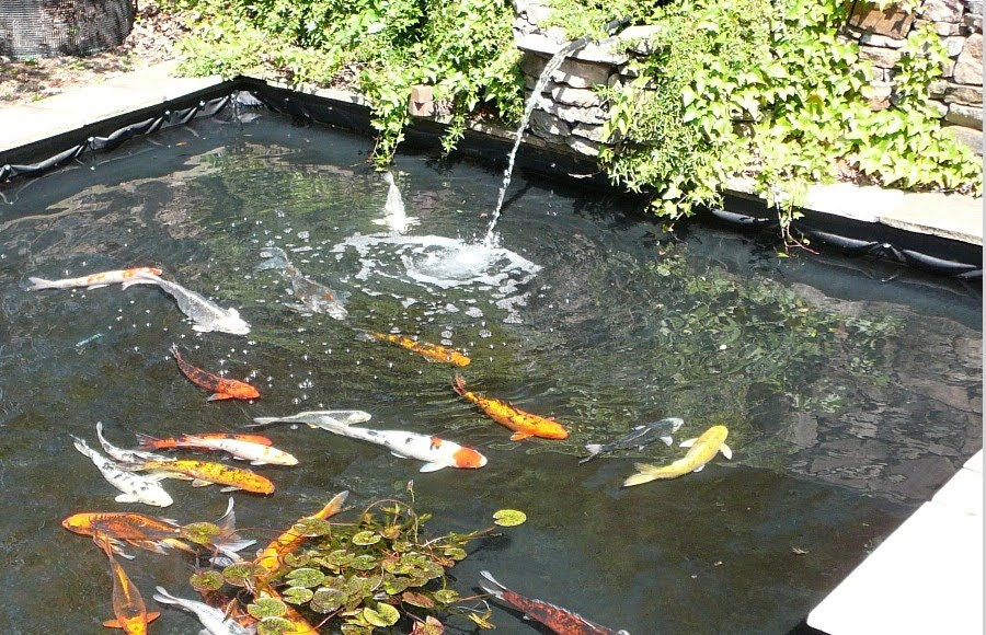 Backyard Fish Pond Designs