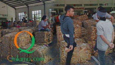 Photo of Petani Tembakau Merugi, Pemerintah  Tolong Bikin Regulasi