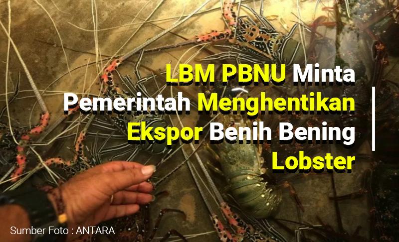 PBNU-Minta-hentikan-Ekspor-benih-lobster