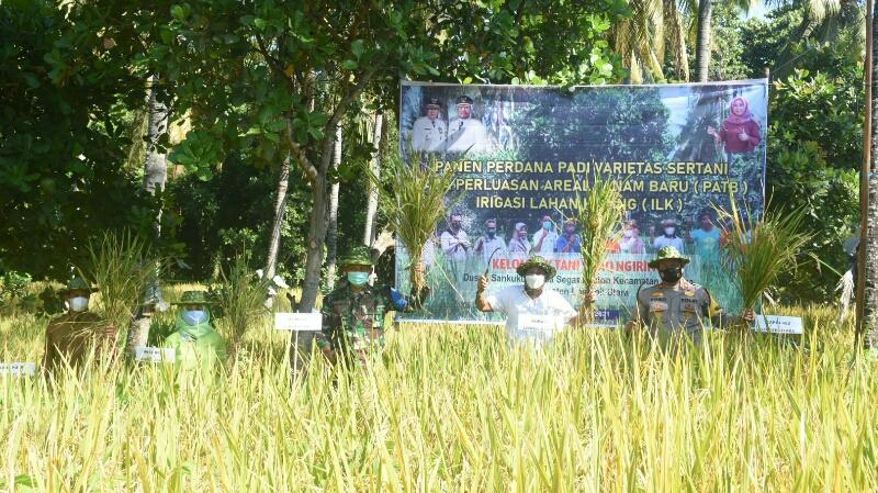 Bupati Lombok Utara H Djohan Sjamsu ketika panen perdana padi varietas Setani di Desa Segara Katon