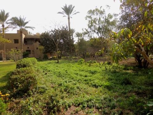 Wissa Wassef dye plants garden