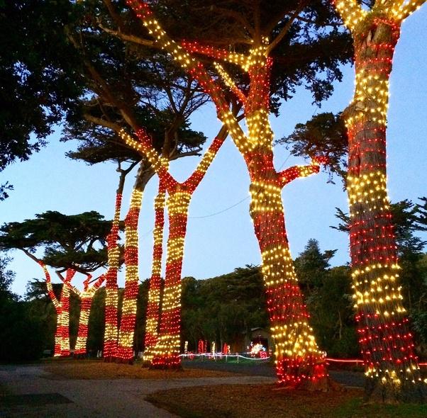 Zoo Lights Sf