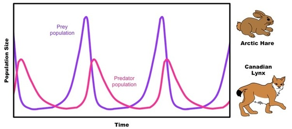 Predator And Prey Natural Selection Graph