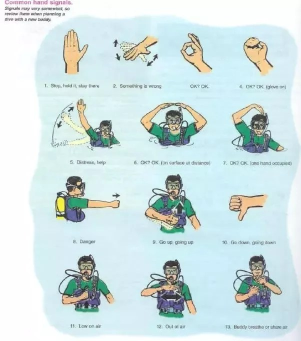 Image result for pictures of underwater dive communication