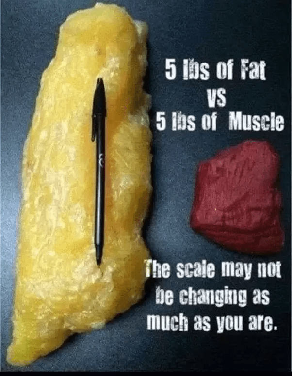 Vs Losing Gaining Muscle Weight