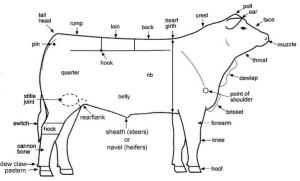 What are the external parts of a cow?  Quora