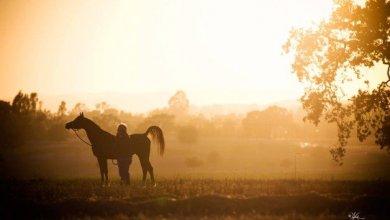 Photo of تأسيس أول جمعية لقفز الحواجز بالمملكة وتسأولات بشان غياب جمعية الخيول العربية