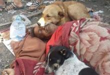 صورة كلاب تحرس جثة مشرد يمني اعتاد إطعامها بعد وفاته في الشارع