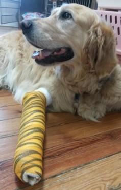 Facebook/Middlebranch Veterinary