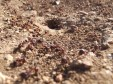 Ant holes every other step