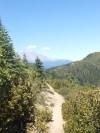Shasta on the trail