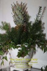 Christmas at Bellmont Plantation_120819_9208