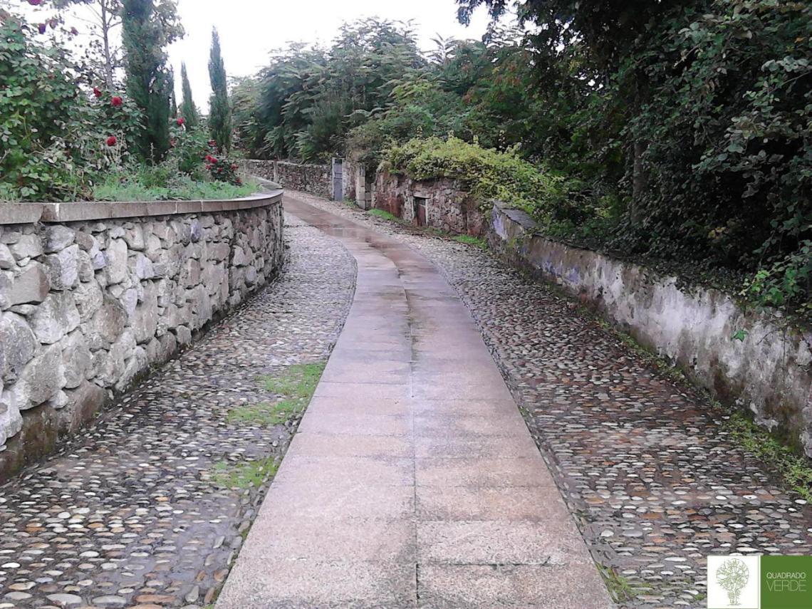 CAMPO-FALAGUEIRA (3)