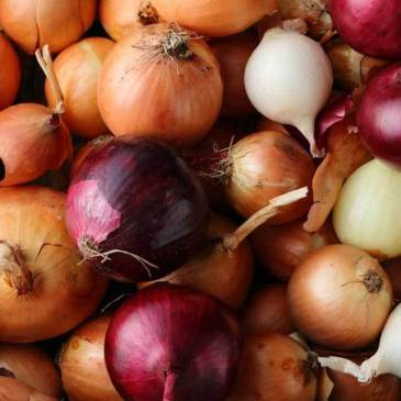 Growing Storage Onions Part 1: Getting Ready
