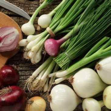 Growing Storage Onions Part 3: Transplanting, Watering & Harvesting
