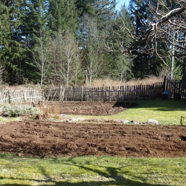Through the Seasons in a Quadra Food Garden: Blog #4