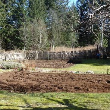 Through the Seasons in a Quadra Food Garden: Blog #4