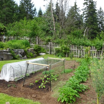 Through the Seasons in a Quadra Food Garden: Blog #9