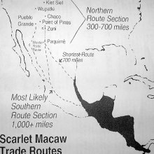 Figure one: Scarlet Macaw trading routes map